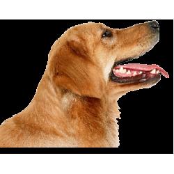 Villanypásztor szett kutyáknak
